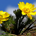 01 Tavaszi héricsek