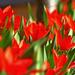 01 Tavasz virágai a kerékpárút mellett