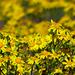 07 Tavasz virágai a kerékpárút mentén