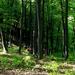 03 Áprilisi erdő I.