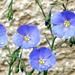 10 Májusi lenvirágok