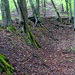 01 Gödör körül nőtt fák