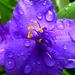01 Eső cseppes virág
