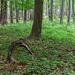 02 Szarvak az erdőben