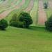 04 A mező