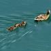 09 Élet a tó vizén