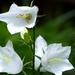 02 Lakótelepi virágok