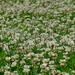 08 Lakótelepi virágok