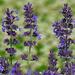 09 Lakótelepi virágok