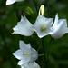 11 Lakótelepi virágok