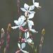 12 Lakótelepi virágok