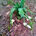 A korai tavasz áldozatai (01.28.)