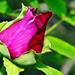 Bimbózó tavasz