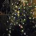 Az idén 2 karácsonyfánk van