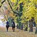 Lovas attak az ősz ellen