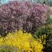 Tavaszi színpaletta