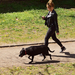 Kutyasétáltatás (1)