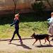 Kutyasétáltatás (3)