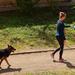 Kutyasétáltatás (5)