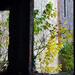 Ablakon túli ősz