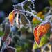 téli képek, fagyott színek
