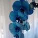 orchidea, Lettikének
