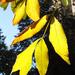 Őszi levelek 3.