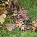 Gombák ősszel