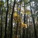 Őszi erdő 1.