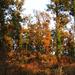 Az erdő szinei