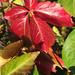 Őszi levelek 10.