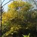 Napfényes ősz