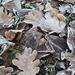 """""""Kifehéredett"""" levelek"""