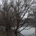 Vízben álló fák