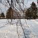 Fények, árnyak, fák, és hó