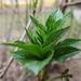 Zöld levelecske...