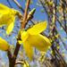 Tavaszt idéző