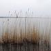 Velencei-tó (3)