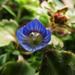 Tavaszi apróságok (6)
