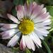 Tavaszi apróságok (2)