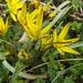 Tavaszi apróságok (10)