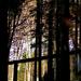 Séta az erdőben