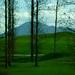 Szlovénia, fák, hegyek