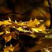 Album - Archív 2012 November 2