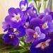 Album - virágok2