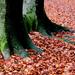 Bokáig az őszben
