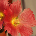 Album - Kerti virágaim nyáron