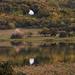 Színjáték a tónál - Tihanyi belső tó