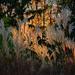 Arborétum Vácrátót ősz 18