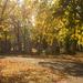 Őszi napfény